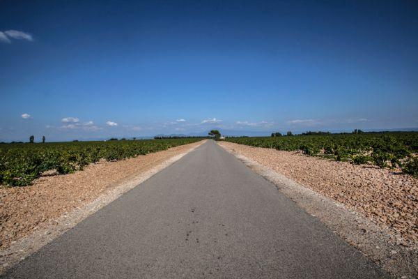 Le vignoble de Châteauneuf-du-Pape - Terroir de galets roulés