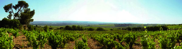 VIGNOBLE CHATEAUNEUF 4